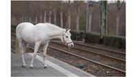 Jenny, kuda betina ini berjalan sendirian selama 14 tahun (Sumber: Boredpanda)