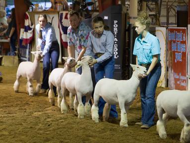 Sejumlah orang memegangi domba mereka saat sebuah kontes dalam Pameran dan Rodeo Texas Utara  2020 di Denton, Texas, 22 Oktober 2020. Pameran dan Rodeo Texas Utara 2020 digelar di Denton pada 16-24 Oktober dengan menampilkan pertunjukan ternak, kontes, rodeo, serta karnaval. (Xinhua/Dan Tian)
