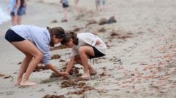 Pengunjung memeriksa beberapa dari ribuan kepiting yang terdampar di sepanjang pantai Dana Point, California, Rabu (17/6/2015). Kepiting-kepiting tersebut pada bulan Januari lalu pertama muncul di Newport Beach. (REUTERS/Sandy Huffaker)