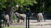 Pensiunan gajah sirkus terlihat di lingkungan mereka yang baru dibuat di Taman Safari Knuthenborg, Denmark, Sabtu (30/5/2020). Keempat gajah itu dibeli pemerintah Denmark tahun lalu setelah dimulainya peraturan yang melindungi hewan liar dari bisnis pertunjukan. (Claus Bech/Ritzau Scanpix/AFP)