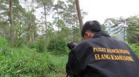 Sepasang elang Jawa bernama Nyi Santi dan Ki Tarum diterbangkan Jokowi di wilayah Situ Cisanti pada akhir Februari lalu. (Liputan6.com/Jayadi Supriadin)