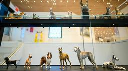 Sejumlah tokoh anjing yang ditampilkan di museum anjing bernama Museum of the Dog di New York City, 1 Februari 2019. Selain lukisan, museum ini juga akan memajang aneka patung, hiasan porselen, buku, hingga poster film bertema anjing (Johannes EISELE/AFP)