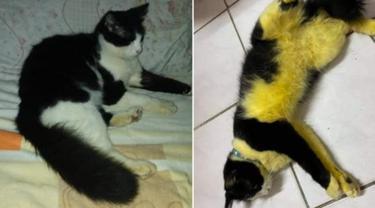 Percaya Hilangkan Kutu dengan Mandi Kunyit, Kucing Ini Malah Mirip Lebah