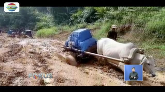 Petugas KPU Lampung distribusikan logistik pemilu gunakan gerobak sapi ke empat desa di wilayah Wayharu, Pesisir Barat, Lampung.