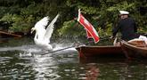 Seekor angsa berusaha menghindar dari tangkapan petugas selama sensus tahunan angsa Ratu Elizabeth yang dikenal sebagai 'Swan Upping' di Sungai Thames, dekat London, Senin (15/7/2019). Sawn Upping merupakan tradisi sensus untuk menghitung populasi angsa di Inggris. (Tolga Akmen/AFP)