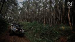 Mobil offroad 4x4 klasik Land Rover melewati hutan pinus menuju trek Sukawana-Cikole di Kab Bandung Barat, Jawa Barat, Jumat (19/10). Wisata offroad ini menjadi salah satu destinasi wisata yang dapat memacu adrenalin. (Liputan6.com/Faizal Fanani)