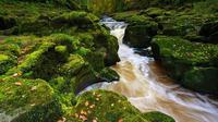 Sungai Strid yang sempit terlihat tenang dari permukaan, namun sesungguhnya, aliran bawahnya sanggup menarik manusia ke kematian.