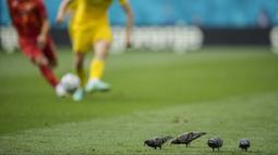 Sejumlah burung merpati mencari makan di tengah lapangan saat pertandingan Grup C Euro 2020 antara Ukraina melawan Makedonia Utara di National Arena stadium, Rumania, Kamis, (17/6/2021). (Foto: AP/Pool/Vadim Ghirda)