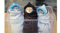 7 Potret Menggemaskan Kucing yang Terbalut Handuk dan Selimut, Butuh Kehangatan (sumber: Boredpanda)