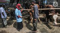 Tim dokter berbincang kepada salah satu pemilik saat memeriksa kesehatan hewan kurban di Jalan I Gusti Ngurah Rai, Jakarta, Kamis (15/7/2021). Sudin KPKP Jakarta Timur juga melakukan pemeriksaan di penampungan yang tersebar di 10 kecamatan. (merdeka.com/Iqbal S. Nugroho)