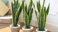Harga tanaman hias relatif terjangkau jika Anda ingin mengoleksinya. Dan bila Anda tak mau repot, ada beberapa jenis tanaman hias yang mudah perawatannya. (Image: Pexels)