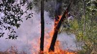 Kebakaran hutan (Antara)