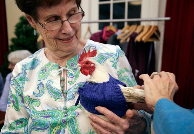 Barbara bersama seekor ayam yang memakai sweater rajutnya   Photo: Copyright nypost.com