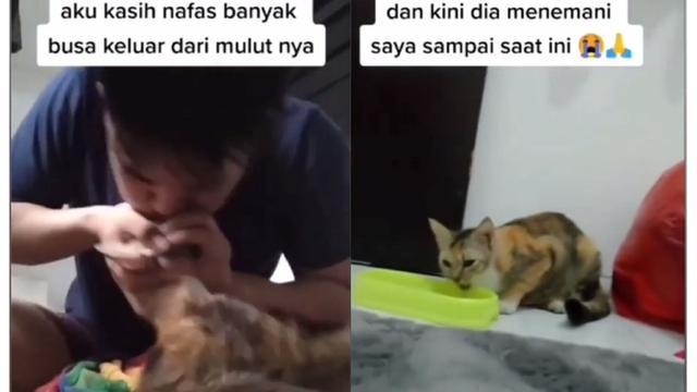 Beri Napas Buatan Kucing Yang Keracunan Aksi Pria Ini Tuai Pujian