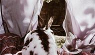 Animals - Beauty