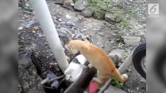 Dua kucing yang tengah berkelahi mendadak berhenti ketika terdengar suara azan.