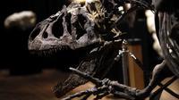 Kerangka dinosaurus Allosaurus dipamerkan di rumah lelang Drouot, Paris, Prancis, Sabtu (10/10/2020). Kerangka dinosaurus yang ditemukan di daerah Johnson, Wyoming, AS, tersebut akan dilelang pada 13 Oktober 2020 dan diperkirakan harganya antara 1-1,2 juta euro. (AP Photo/Thibault Camus)