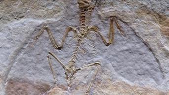 Fosil Naga Terbang Ditemukan di Gurun Chile