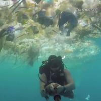 Dalam video viral tersebut juga terlihat bagaimana ikan berenang diantara sampah yang menumpuk di 'lautan plastik' yang ada di Bali. (Foto: Instagram)
