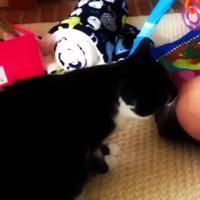 video ini membuktikan jika kucing senang menjilat kepala bayi (foto : istimewa)