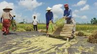 Sejumlah petani melaksanankan panen padi jenis Inpari 40 di Desa Banyu Urip, Kecamatan Praya Barat, Kabupaten Lombok Tengah NTB. Selain Inpari 40, terdapat sejumlah teknologi pertanian lain yang diterapkan petani untuk meningkatkan produktivitas padi.