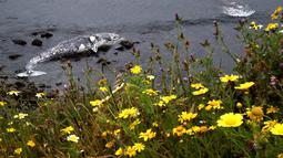 Bangkai paus abu-abu mati terdampar di pantai dekat Pacifica State Beach, Pacifica, California (14/5/2019). Paus itu ditemukan dalam keadaan mengenaskan dengan kulit yang terkelupas. (AFP Photo/Justin Sullivan)