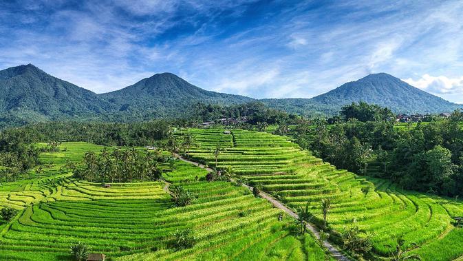 Teras sawah Jatiluwih di Bali. (Creative Commons)
