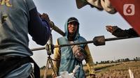 Petani menimbang hasil panen sebelum dikirim ke tengkulak di persawahan kawasan Rorotan, Jakarta, Kamis (30/7/2020). Lahan di persawahan Rorotan tidak seluruhnya milik petani, dari 420 hektare, hanya 29 hektare milik pribadi dan sisanya dimiliki oleh swasta. (merdeka.com/Iqbal S. Nugroho)