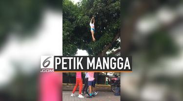 Sekelompok cheerleader di Filipina gunakan gerakan melompat untuk memetik mangga di pohon tinggi. Aksi mereka ternyata berhasil dan menjadi viral.