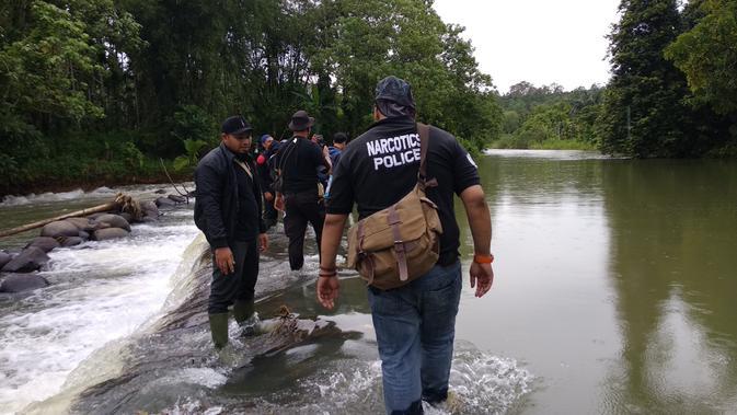 Tim gabungan Mabes Polri, Polda Aceh, Polres Lhokseumawe, menemukan lahan ganja di di tengah hutan di Dusun Uteun Punti, Desa Sawang, Kecamatan Sawang, Kabupaten Aceh Utara. (Liputan6.com/Nafiysul Qodar)