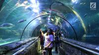 Pengunjung melihat ikan di Seaworld Ancol, Jakarta, Selasa (5/2). Libur Tahun Baru Imlek 2570 ancol masih menjadi tempat wisata pilihan untuk warga Jakarta dan sekitarnya. (Liputan6.com/Johan Tallo)