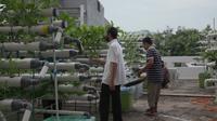 Jemaah yang mengurus tanaman hidroponik di atap Masjid Baitussalam Jakarta Barat ini mampu memanen 30 kg sayur dalam sekali panen. (Foto: Liputan6.com).