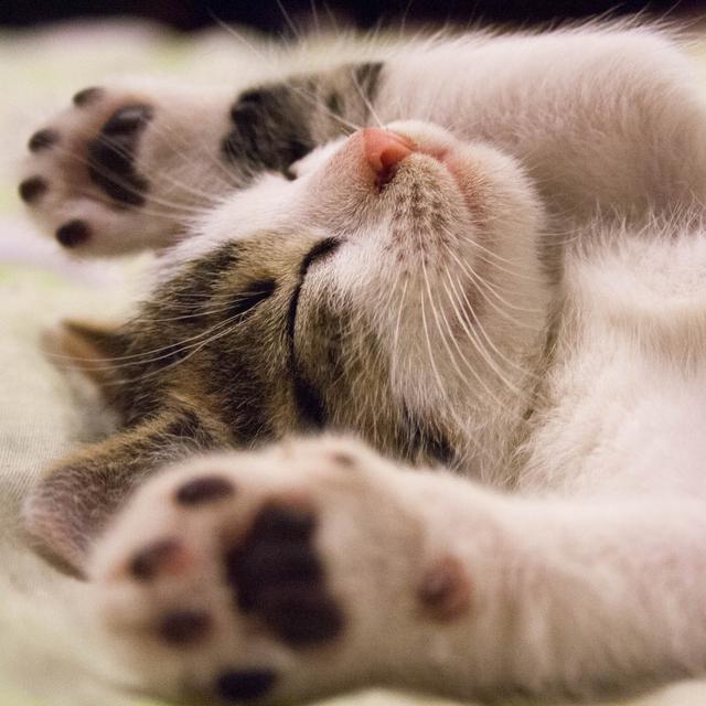 6 Manfaat Ilmiah Memelihara Kucing Nomor 4 Paling Romantis Global Liputan6 Com