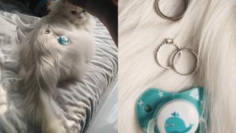 Aksi Lucu Wanita Jadikan Kucingnya Properti untuk Foto