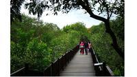 Hutan Mangrove Gunung Anyar (Sumber: surabaya.go.id)
