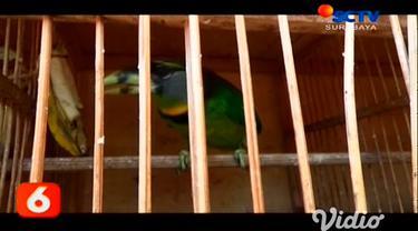 Satuan Reskrim Unit Pidek Kepolisian Resor Gresik, Jawa Timur, membongkar kasus perdagangan satwa langka jenis burung dan mengamankan sebanyak 13 ekor burung langka dilindungi yang diperjualbelikan di pasar ilegal wilayah setempat.