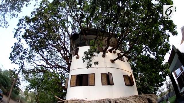 Kul Pradeep Singh membuat rumah yang unik. Rumah dibangun diatas pohon mangga berusia 80 tahun.