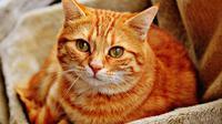 Ilustrasi Kucing (pixabay.com)