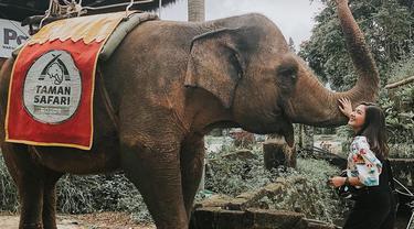 Pemilik nama lengkap Jessica Mila Agnesia memang terkenal sebagai sosok penyayang binatang. Ia beberapa kali sampaikan dukungan untuk melindungi hewan langka. Kecintaannya terhadap hewan terlihat saat antusias bertemu dengan gajah di Royal Safari Garden. (Liputan6.com/IG/@jscmila)