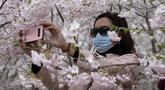 Seorang wanita yang mengenakan masker mengambil gambar bunga sakura di Taman Yuyuantan, Beijing, China, Kamis (26/3/2020). Bunga sakura bermekaran memikat warga untuk keluar rumah dari yang sebelumnya membatasi diri karena pandemi virus corona COVID-19. (AP Photo/Ng Han Guan)