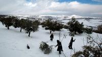 Anak-anak Palestina bermain di salju di desa Tuqu 'dekat kota Betlehem Tepi Barat pada hari Jumat (AFP Photo)