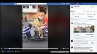 Anjing mengendarai motor (Facebook).