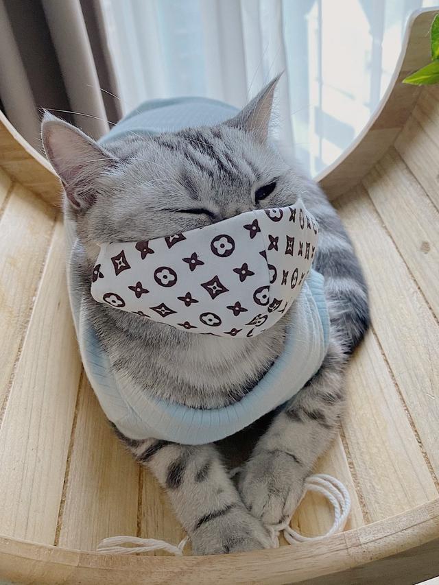 Gambar Kucing Untuk Profil Wa godean.web.id
