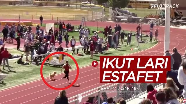 Berita video momen lucunya seekor anjing yang ikut lomba lari estafet dan catatan waktunya hanya terpaut sedetik lebih lambat dari rekor Usain Bolt.