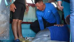 Seorang pawang membaringkan lumba-lumba di dalam helikopter untuk dipindahkan ke Dolphinarium di Cienfuegos, Kuba (8/9). Lumba-lumba ini dipidahkan dari dolphinarium Cayo Guillermo menyusul datangnya badai Irma. (Osvaldo Gutierrez Gomez / ACN via AP)