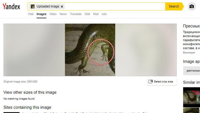 Cek Fakta Liputan6.com menelusuri informasi judul artikel Dabbah binatang tanda kiamat