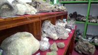 Ada fosil gajah purba ditemukan di Brebes Selatan, Jawa Tengah. (Liputan6.com/Fajar Eko Nugroho)