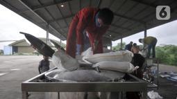 Tim Penabur dari BPPT memasukkan garam ke dalam konsol sebelum dibawa pesawat di Lanud Halim Perdanakusuma, Jakarta (9/1/2020). TNI dan BPPT melakukan operasi TMC dengan menaburkan garam di atas awan kumulonimbus melalui dua pesawat, yakni CN-295 dan Cassa 212-200. (merdeka.com/Iqbal S. Nugroho)