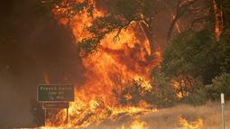 Pohon-pohon terbakar oleh api dalam kebakaran hutan yang dijuluki Carr Fire di Whiskeytown, California, Jumat (28/7). Sekitar 700 petugas pemadam kebakaran dikerahkan memadamkan api yang telah menghanguskan 1.900 hektare lahan ini. (JOSH EDELSON/AFP)