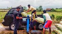 Kelompok Tani Tunas Harapan I saat panen timun di Desa Cilayang Kecamatan Cikeusal, Serang, Banten. Timun dipasarkan ke Pasar Induk Kramat Jati,